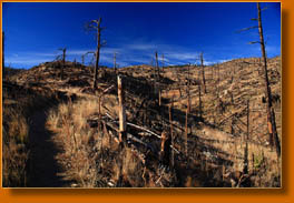 The destruction from the 2000 Bobcat Gulch Wildfire along the Ginny Trail