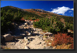 Fall color on the Longs Peak Trail