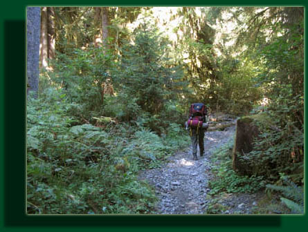 Andra hikes along the beautiful Hoh River Trail