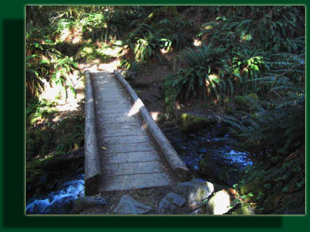 The Hoh River Trail crosses many streams