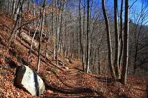 Laurel-Snow Pocket Wilderness, Tennessee