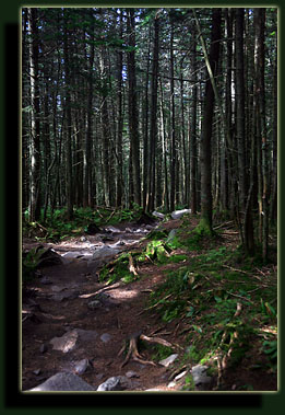 Mt Moosilauke trail through dense hemlock