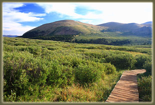 Boardwalk through the willows to Mt Bierstadt