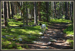 Frank on the trail