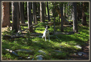 Frank on the trail to North Bald Mt