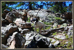 Frank rockhopping along the trail