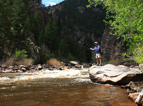 fly fishing on the Poudre River