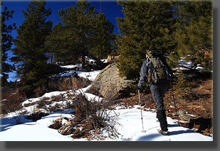 Joe heads up to the high point in the Poudre Wilderness