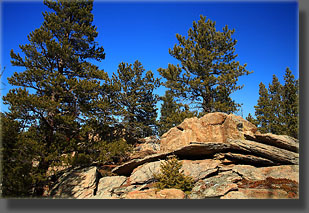 pines and rocks in the Poudre Wilderness