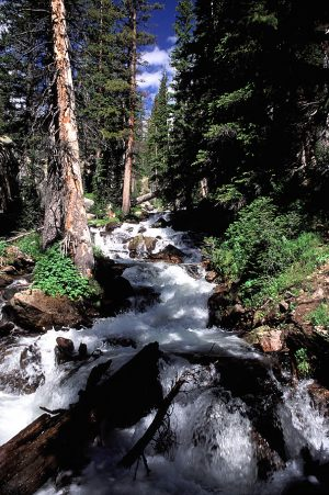 Mt Zirkel Wilderness waterfall